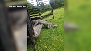 VIDEO: 12-foot Gator Released Into The Wild After Tying Up... Premier Chevrolet Buick Gmc In Livingston Tx Serving Huntsville The Bus Stop Cleveland Food Trucks Roaming Hunger Fleetwood Mac Coming To Check Out Tour Dates Fox8com Muscle Maker Grill Dallas Warren Buffetts Berkshire Bets Big On Americas Truckers Buys Pilot Flying J Travel Centers Lebron James Lead Lakers Past Cavs Return National Ldon San Diego And Paris Are Readers Mostmissed Nonstop Truck Driver Rescued After Falling 20 Feet Down Manhole Gangrelated Shootout Captured Video