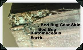 Diatomaceous Earth Kills Bed Bugs