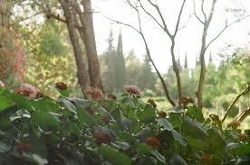 Matina Galati Tags Film 35mm Zenit Zenitem Analog Colour Botanicgarden Outside Nature Flowers