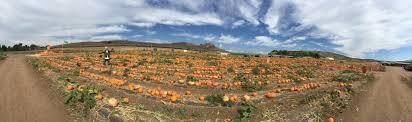 Pumpkin Patch Irvine University by Tanaka Farms Pumpkin Patch Oc Mom Blog
