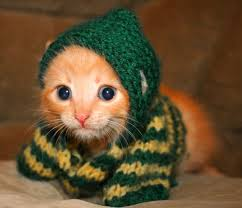 cat hoodies cats in hoodies