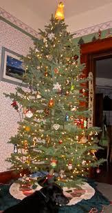 Colorado Springs Christmas Tree Permit 2014 by Ecorover December 2011