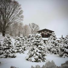 Pinecrest Christmas Tree Farm by Buy Nearby For Your Christmas Tree Buy Nearby Mi