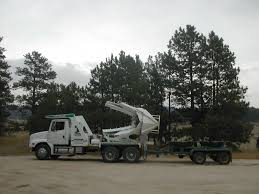 C Lazy T Tree Movers Photos Shechtman Tree Care C Lazy T Movers Bucket Truck Services Tamarack West Linn Pagodins Removal Service Providing The Best Dead Using A Boom Extension Truck By Phoenix Valley Equipment For Sale A Better Arborist Treetrimming Catches Fire In Mims Undcover Veggie Commercial Success Blog Asplundh Expert Co Taps Our Arbormax Intertional Trucks Bartlett Experts Youtube Gmc Asplundh Tree Truck V 10 Fs 17 Farming Simulator Mod