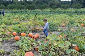 Pumpkin Picking Nj Near Staten Island by Johnson U0027s Corner Farm Medford All You Need To Know Before You