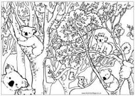 Stylish Inspiration Koala Coloring Pages Colouring