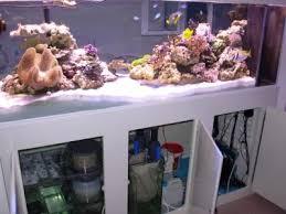 aquarium nano eau de mer le bac récifal d alex eau de mer divers aquarium webzine l