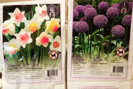 garden bliss bought bargain bulbs at costco