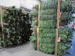 Creative Home Depo Christmas Trees Fetching Tree Express The Depot Community