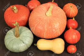 Types Of Pumpkins And Squash by Autumn Harvest Various Pumpkins Types Pumpkin Varieties Stock