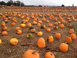 Pumpkin Patches Near Temple Texas by 8 Charming Pumpkin Patches Around San Francisco