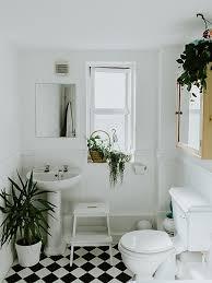 zimmerpflanzen badezimmer die 5 besten arten stylight
