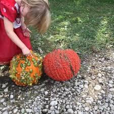 Pumpkin Farm Illinois Best by Kroll U0027s Fall Harvest Farm 44 Photos U0026 35 Reviews Pumpkin