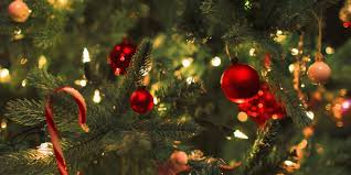 Are Christmas Trees Poisonous To Dogs Uk how to create a welcoming entrance in your hallway this christmas