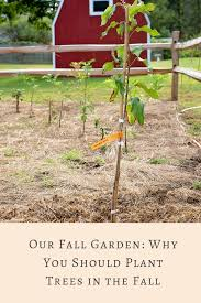 Our Fall Garden: Why You Should Plant Trees In The Fall ... Whatsapp Competitors Revenue And Employees Owler Company 10 Off Arbor Day Foundation Promo Codes We Are Thankful For All You Treeplanters Out There Via Staying At Lied Lodge On The Farm Idyllic Pursuit 60 Off Cpa Horticulture Coupons October 2019 Tree Help Coupon Code Uk Magazine Freebies October 2018 E2 Lens Renew 50 Save Big On Sandisk Memory Cards Other Storage Products Zaffiros Pizza New Berlin Wi Discount Tire Colonial Heights Greenlight Nasdaq Energy
