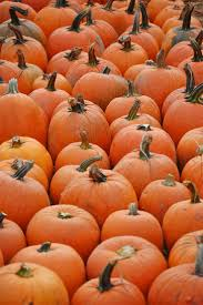 Chesterfield Pumpkin Patch Berry Farm by 509 Best Pumpkin Passion Images On Pinterest Pumpkins Autumn