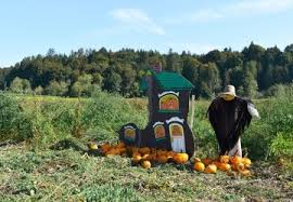 Best Pumpkin Patch Snohomish County by The 10 Best Pumpkin Patches To Explore This Fall Seattle Refined