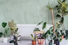 pflanzen fürs bad 5 arten für helle badezimmer gartenflora