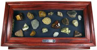 Back To Rocks Gems And LapidarySeashell Display Cases