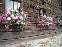 Rustic Austrian Pink Window Boxes