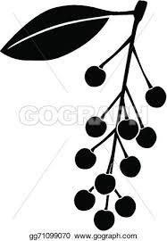 Vector Art Silhouette black and white image of bird cherry berries Clipart Drawing gg