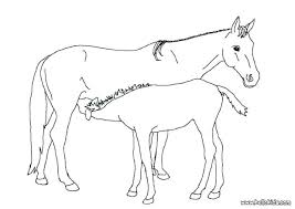 Baby Foal Coloring Pages Mother Horse And Color Ideas Pag Mare