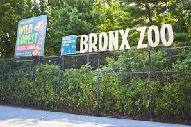 Bronx Zoo Halloween by Zoo Sued After Child Swallows Souvenir Penny New York Post