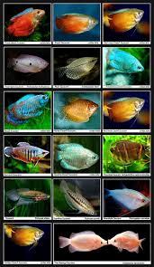 Spongebob Fish Tank Ornaments Uk by The 25 Best Fish Tank Themes Ideas On Pinterest Aquarium