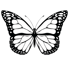 Monarch Butterfly Coloring Pages Free Sheets Printable For Kids Page Life Cycle Full Size