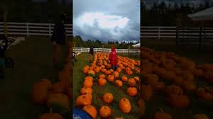 Johnson Farms Pumpkin Patch by The Pumpkin Patch At Roloff Farms 2016 Youtube