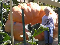 Worlds Heaviest Pumpkin Pie by A Line From Linda Peter Peter Pumpkin Eater