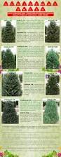 Christmas Tree Species by Nick S Evergreens