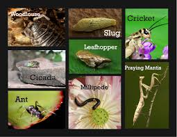 World Of Bugs – Backyard Guide   Bula Bug Diy Small Backyard Ideas Archives Modern Garden Recent Blog Posts Move Smart Solutions Blog Drone Defence Vr Gear Sneaky Flying Drones Want To Snoop Your Backyard Bkeepers Are Buzzing Wlrn Defend Territory In Turret Defense Game How Ppare Your Survive Winter Readers Digest June 2015 Thegenerdream Weeds Honey Bees Love My Adventures Bkeeping Buzzing Abhitrickscom 25 Ways To Seriously Upgrade Familys 13 Things Landscaper Wont Tell You Spring Is With Bees Rosie The Riveters