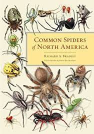 Remains Of The Day Spiders by Amazon Com Biology Of Spiders 9780199734825 Rainer Foelix Books