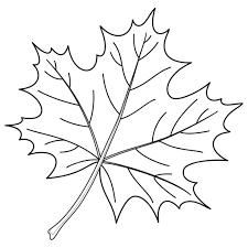 Maple Tree Leaf Coloring Page Eliolera