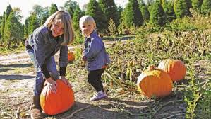 Best Pumpkin Patches In Cincinnati by A Guide To Pumpkin Patches In Hamilton County