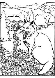 Comment Dessiner Un Chaton Kawaii Avec Dessin Chaton Et Animaux