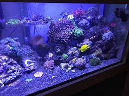 Show Us Your 120 Gallon Aquascapes | REEF2REEF Saltwater And Reef ... 75 Gallon Tank Aquascape Ideas Please Reef Central Online Community Minimalist Aquascaping Page 3 2reef Saltwater And How To A Aquarium Youtube Tank Rockscape To Drill Cement Your Live Rock Gmacreef Columns In A Saltwater Callorecom Pieter Van Suijlekoms Revisited Is There Science Live Rock Sanctuary The Why I Involuntarily Redid My Mr 7