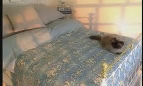 video how to light a platform bed martha stewart