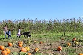 Pumpkin Picking Maryland by Fall Fun At Farms And Orchards In Baltimore