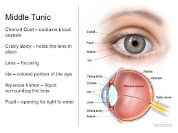 Tanning Bed Eye Protection by The Eye Is In The Orbit Of The Skull For Protection Within The