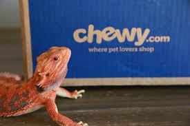 Crested Gecko Shedding Behavior by Bearded Dragon Lady Blog