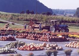Portland Tn Pumpkin Patch by Myers Pumpkin Patch U0026 Corn Maze Localharvest