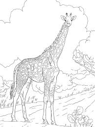 Giraffe Coloring Pages Prints And Colors