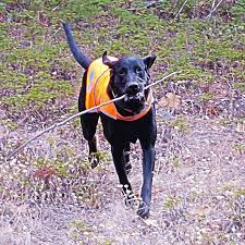 Black Mouth Cur Shed Hunting by Amazon Com Dog Reflective Vest Sizes To Fit Dogs 14 Lbs To 130