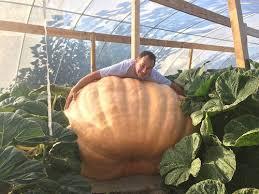 Atlantic Giant Pumpkin Taste by The Battle Of The Giant Pumpkins Food Features Pumpkins