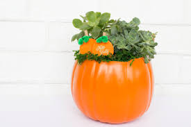 Free Pumpkin Patch Charlotte Nc by Craft Night Out Mt Holly Pumpkin Patch Planters