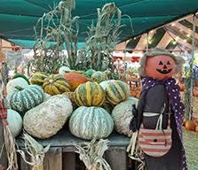 Best Pumpkin Patch In San Bernardino County by Home
