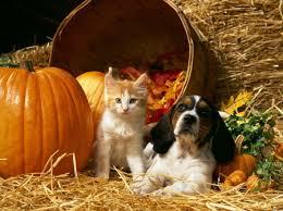 Pumpkin For Pets Diarrhea by 13 Benefits Of Pumpkin For Pets