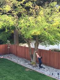 Backyard Tree: Apple Tree Blossoms – Guaipai Garden Design With Backyard Landscaping Trees Backyard Fruit Trees In New Orleans Summer Green Thumb Images With Pnic Park Area Woods Table Stock Photo 32 Brilliant Tree Ideas Landscaping Waterfall Pond Stock Photo For The Ipirations Shejunks Backyards Terrific 31 Good Evergreen Splendid Grass Scenic Touch Forest Monochrome Sumrtime Decorating Bird Bath Fountain And Lattice Large And Beautiful Photos To Select Best For